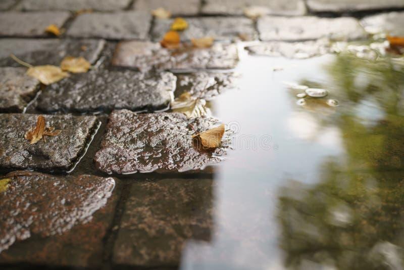 Blöta gammal trottoar med pöl- och höstsidor royaltyfria bilder