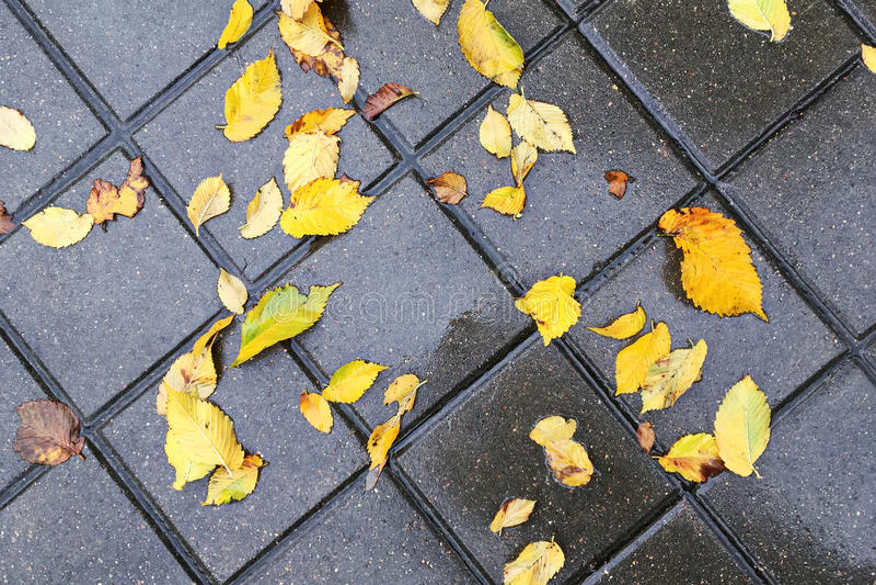 Blöta gula höstsidor på kullerstentrottoar arkivfoto