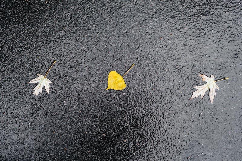 Blöta hal skinande mörk asfalt arkivfoto