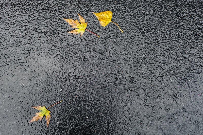 Blöta hal skinande mörk asfalt royaltyfria foton