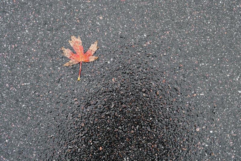 Blöta hal skinande mörk asfalt arkivfoton