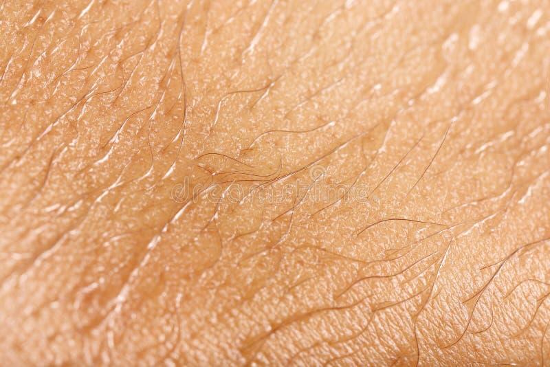 Blöta hud med hår för modell royaltyfri bild