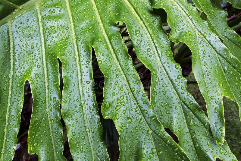 Blöta modeller och texturer av grön bladväxtbakgrund royaltyfria bilder