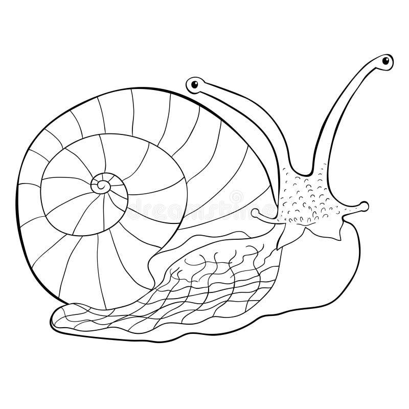 Blötdjur för gastropod för färgläggningkrypsnigel också vektor för coreldrawillustration vektor illustrationer