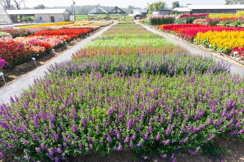Blühen des Blumenbeets im Garten stockfoto