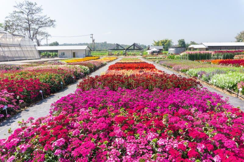 Blühen des Blumenbeets im Garten stockfotos