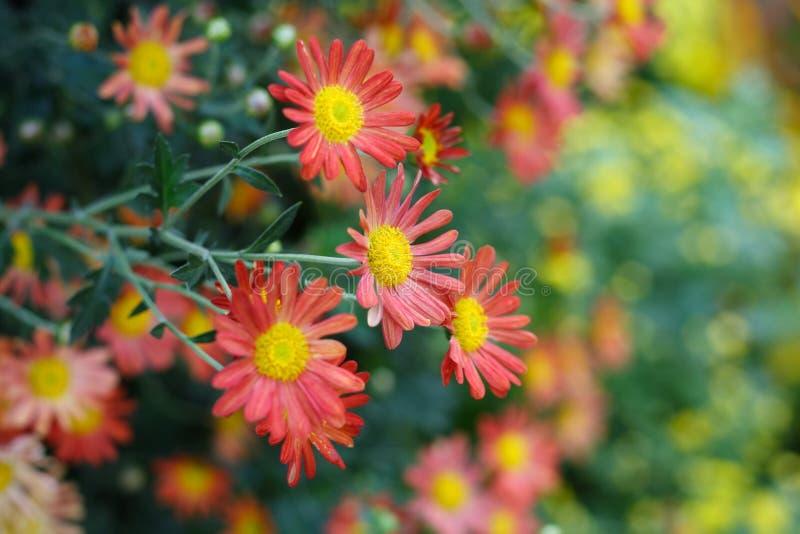 Blühen im Herbst lizenzfreies stockbild