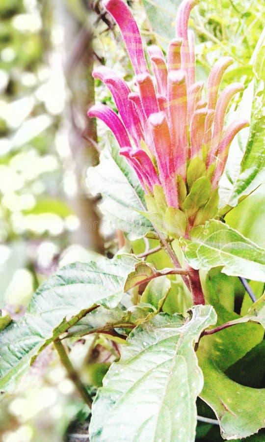 Blühen im Rosa lizenzfreie stockfotos