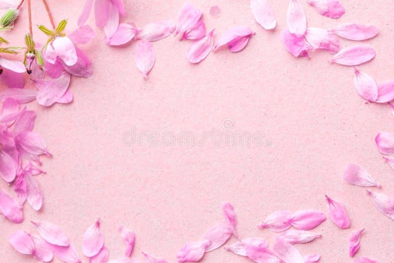 Blühen rosa Blumen auf rosa Hintergrund stockfotos