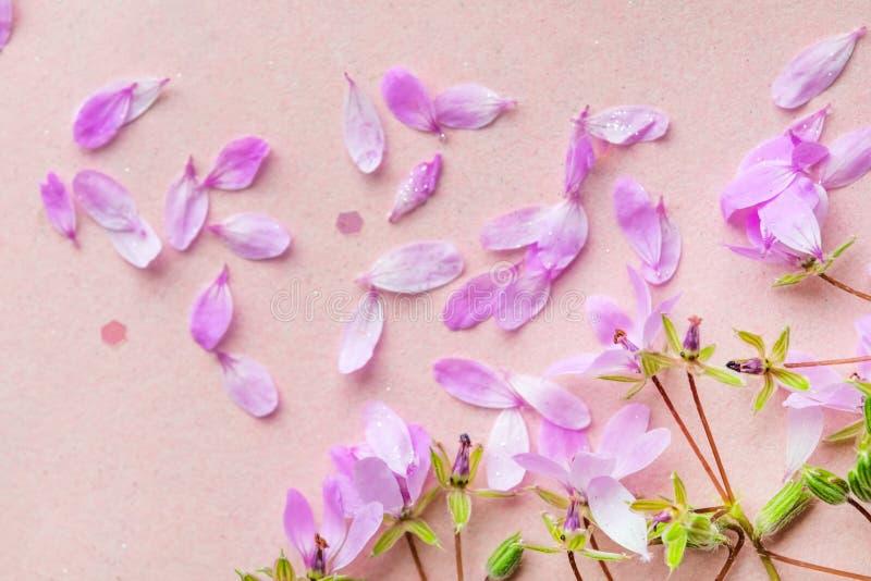 Blühen rosa Blumen auf rosa Hintergrund lizenzfreie stockfotos