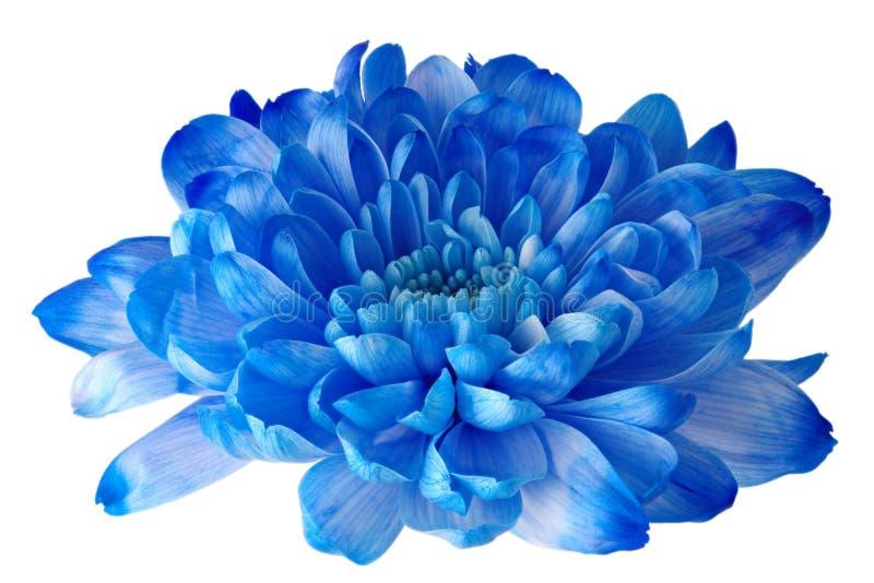Blühen Sie blaues schönes und groß auf einem weißen Hintergrund stockbild