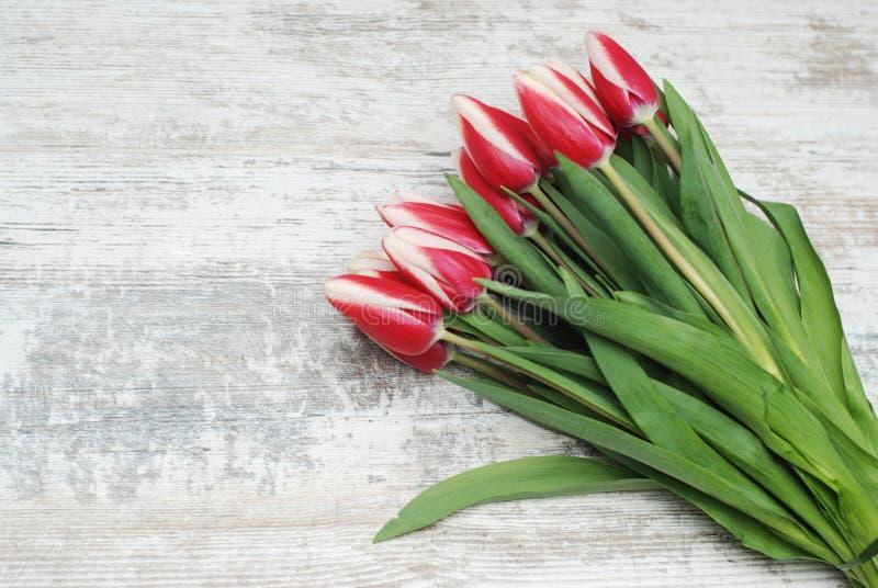 Blühen Sie Blumenstrauß mit den roten und weißen Tulpen im dekorativen Papier gegen die graue Wand, Abschluss oben Kopieren Sie R stockbild