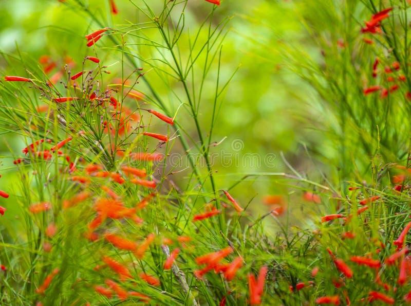 Blühen Sie das Blühen gegen Hintergrund von Blumen und von grünen Bäumen lizenzfreie stockfotos