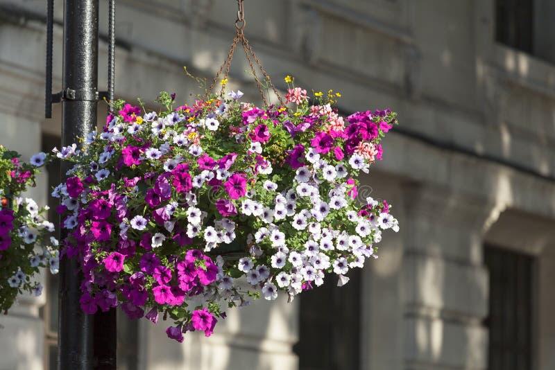 Blühen Sie Dekoration, typische Ansicht der London-Straße, London, Vereinigtes Königreich stockfotos