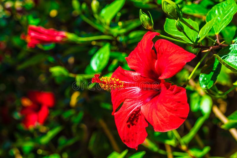 Blühen Sie in einem botanischen Garten in Gran-Kanarienvogel stockbild