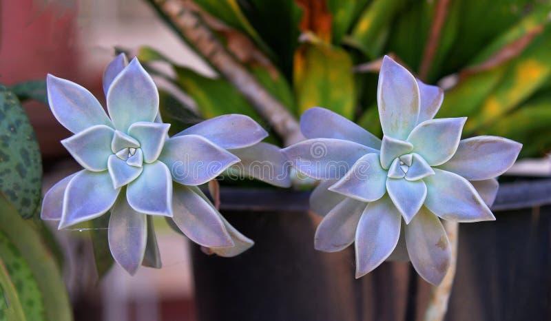 Blühen Sie einen schönen Hintergrund stockbild