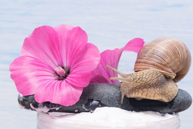 Blühen Sie mit einer Schnecke und seinem Schleim für eine Creme für Haut- und Badekurortverfahren stockfoto