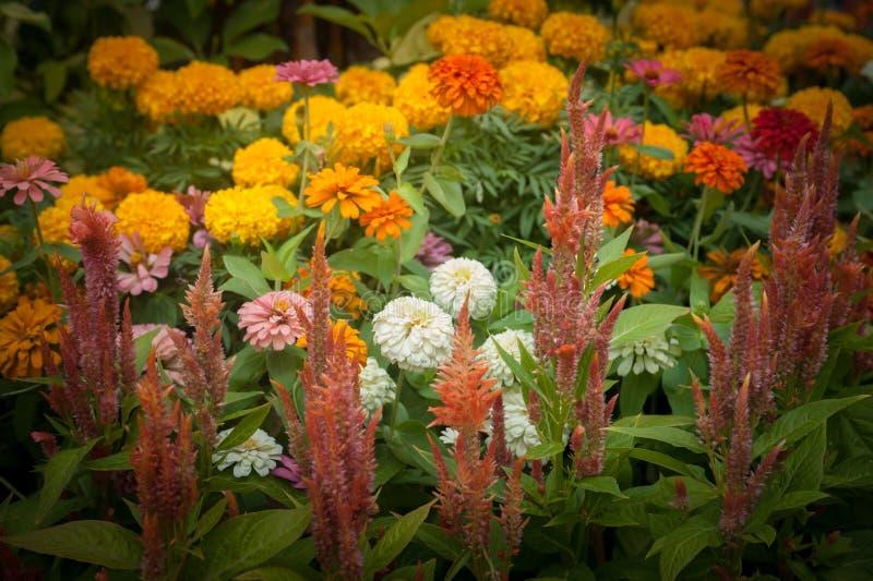 Blühen Sie (weiße, gelbe, orange, purpurrote, rosa Farbe) natürlich bea lizenzfreies stockfoto