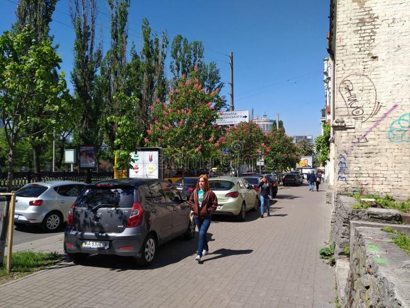 Blühen von Kiew-Kastanien, Leben in der Stadt lizenzfreies stockfoto