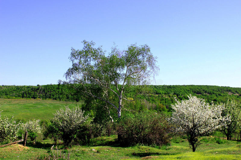 Blühende Bäume im verlassenen Garten lizenzfreie stockbilder