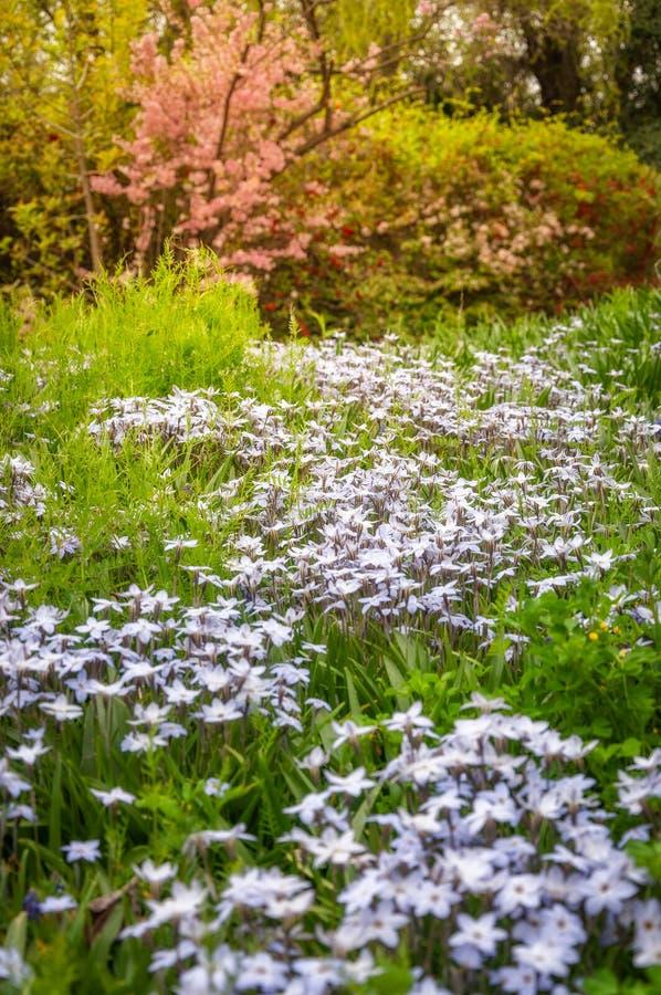 Blühende Bäume und Wiesen mit weißen Blumen bei Floriade stockfoto