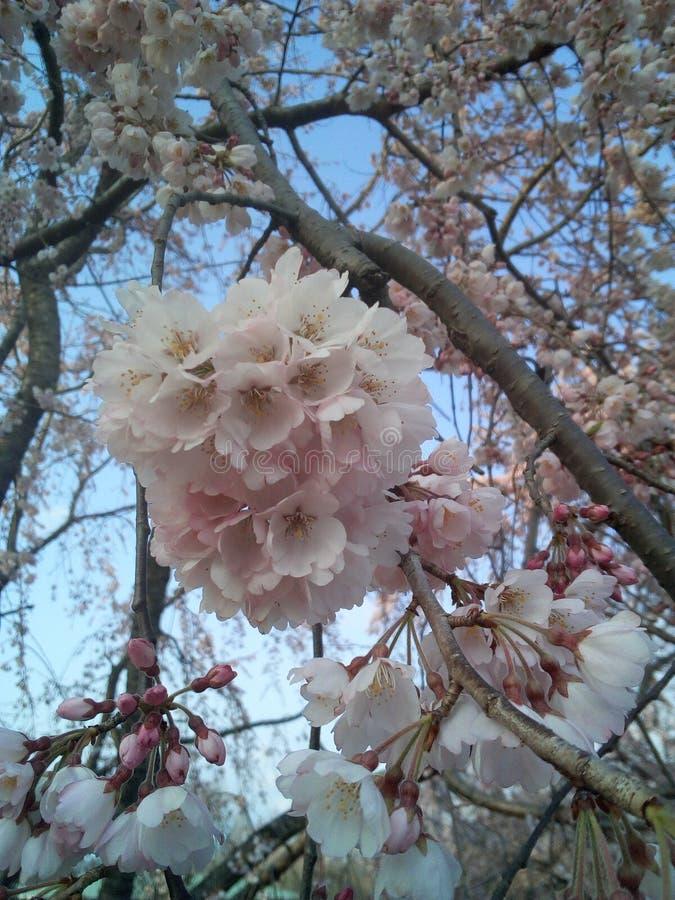 Blühende Blüte lizenzfreies stockbild