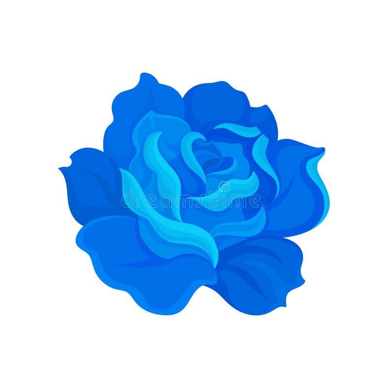 Blühende blaue Rose Vektorabbildung auf wei?em Hintergrund stock abbildung