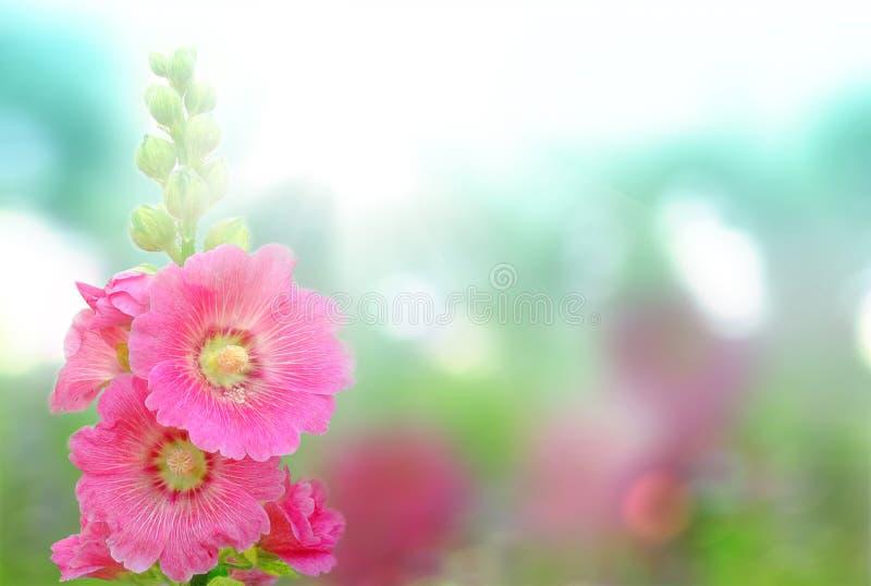 Blühende Blumen stockfotografie