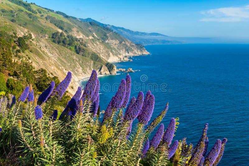Blühende Blumen in Big Sur Kalifornien lizenzfreie stockfotos