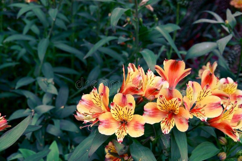 Blühende Blumen und Baum in der Blumenhaube an den Gärten durch die Bucht, Singapur lizenzfreie stockbilder