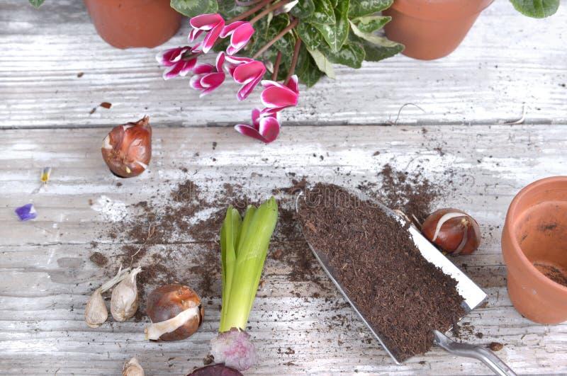 Blühende Blumen und Birnen für Potting lizenzfreies stockfoto