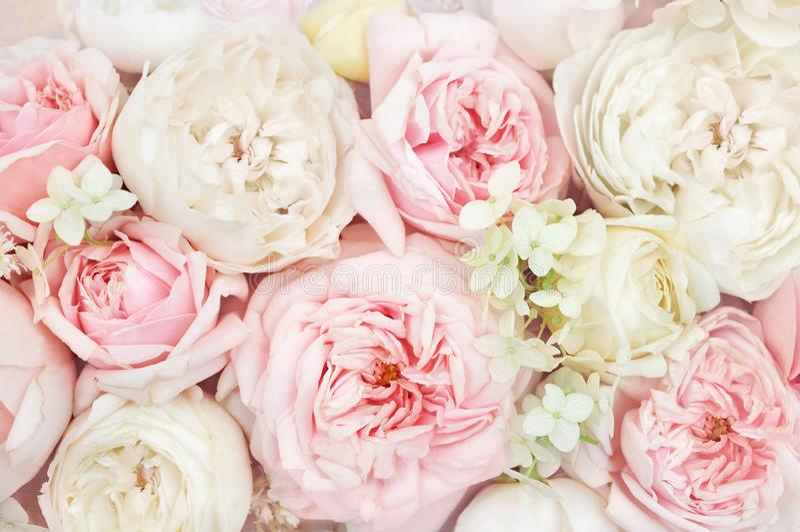 Blühende Blumenkarte des empfindliche Rosenblühende Blumenfestliche Hintergrund-, Pastell- und weichenblumenstraußes des Sommers, stockbilder