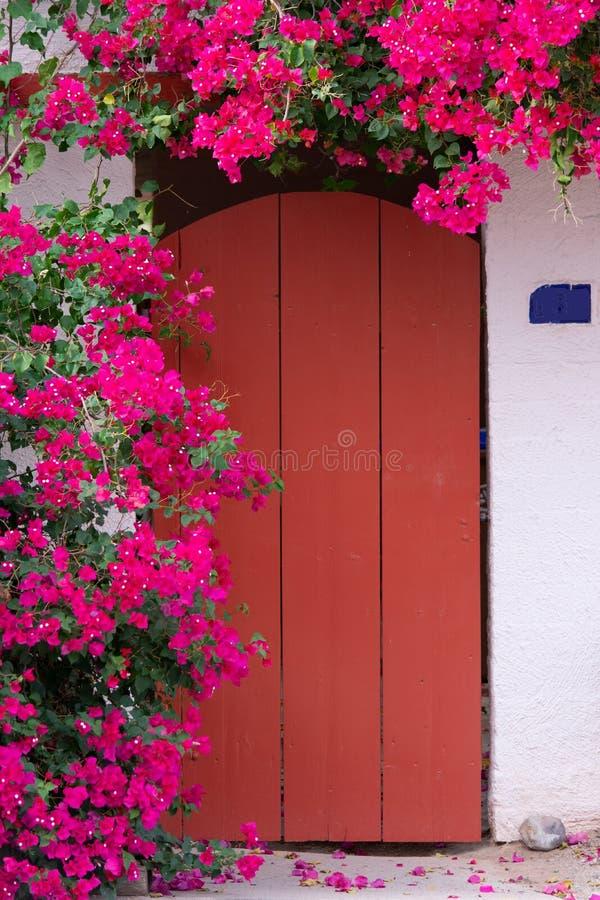 Blühende Bouganvillaanlage nahe bei der roten Tür lizenzfreie stockfotos