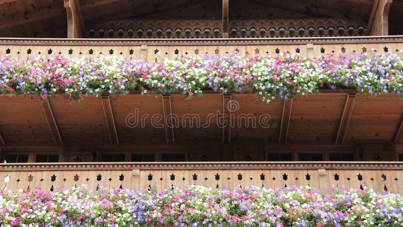 Blühende blühende bunte Petunien lizenzfreie stockbilder