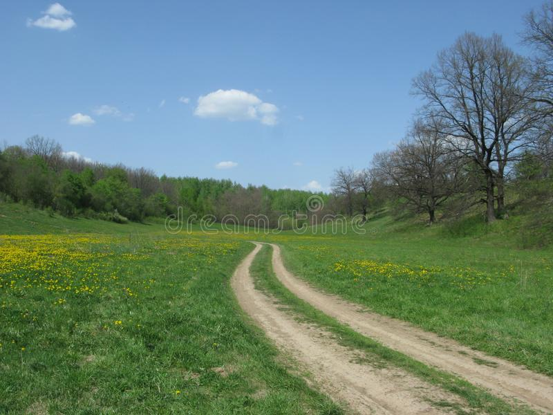 Blühende Frühlingswaldlichtung lizenzfreie stockbilder