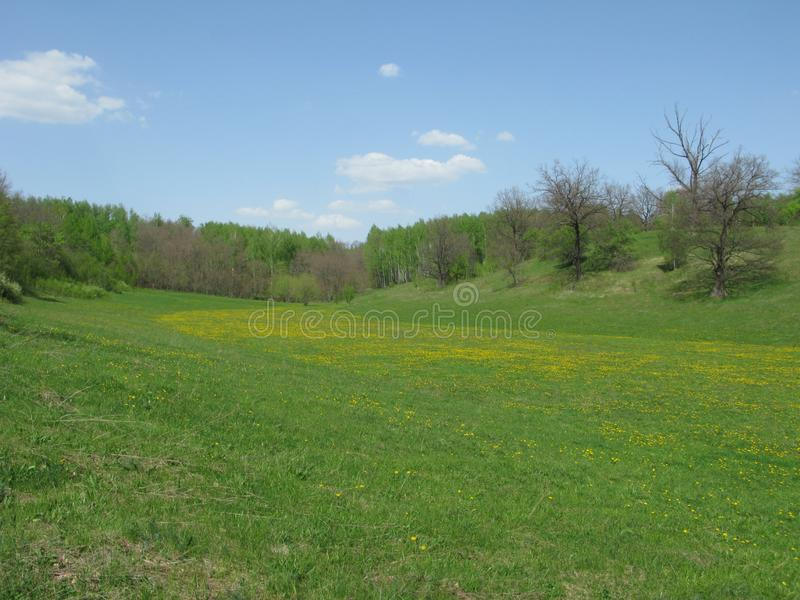 Blühende Frühlingswaldlichtung lizenzfreies stockbild