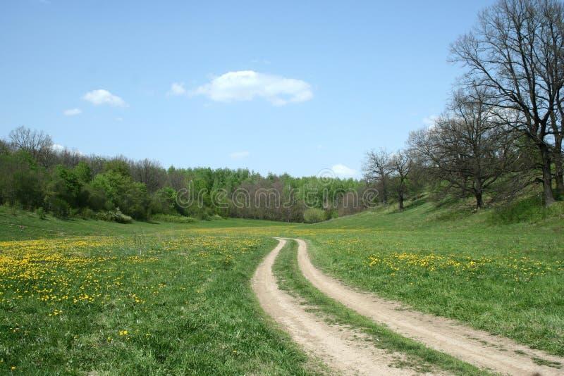 Blühende Frühlingswaldlichtung lizenzfreie stockfotos