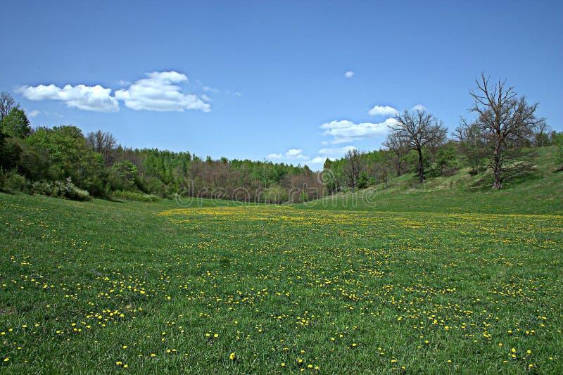Blühende Frühlingswaldlichtung stockfotos