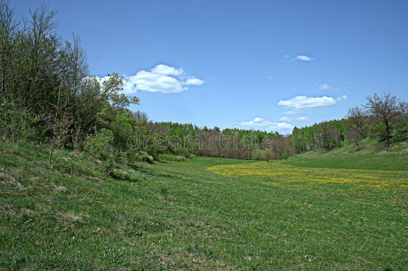 Blühende Frühlingswaldlichtung stockbild
