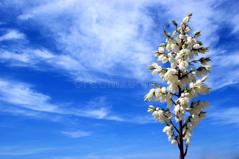 Blühende Himmel lizenzfreie stockbilder
