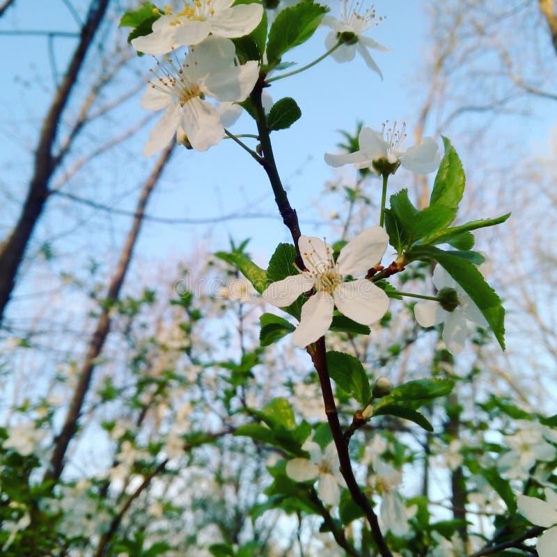 Blühende Jahreszeit stockbilder