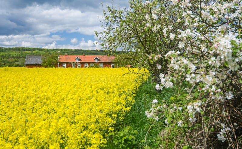 Blühende Jahreszeit in Schweden lizenzfreie stockfotos