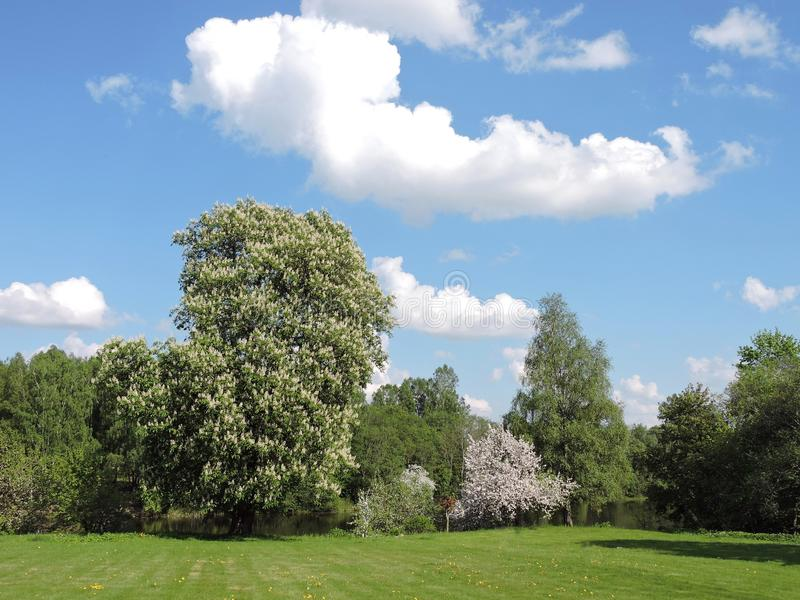 Blühende Kastanien- und Apfelbäume im Frühjahr, Litauen stockfotos