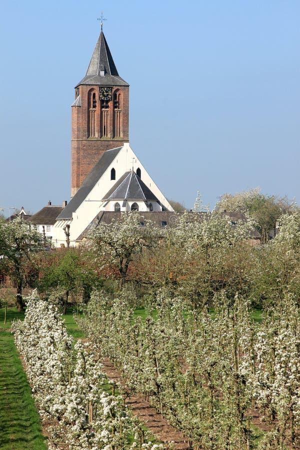Blühende Kirschbäume und verbesserte holländische Kirche stockfoto