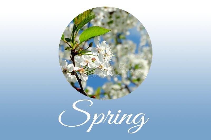 Blühende Kirsche des Frühlinges lizenzfreie stockfotos