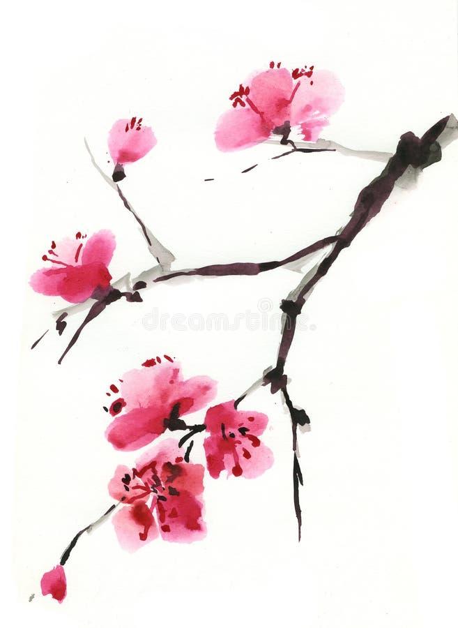 Blühende Kirsche. Frühling. Tinte und Pinsel. stock abbildung