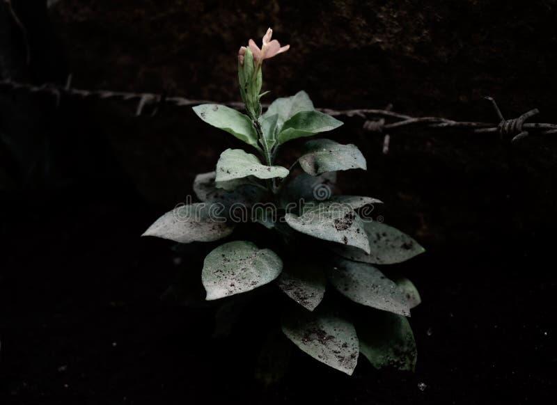 Blühende Knospe im Garten stockbild