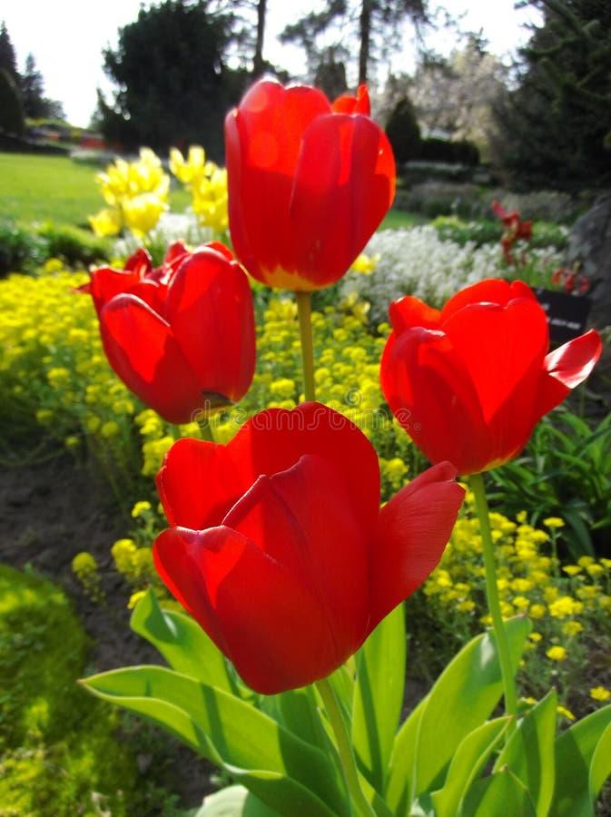 Blühende Knospen stockbild