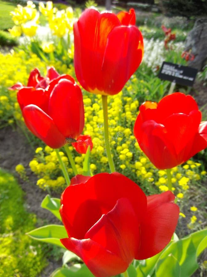 Blühende Knospen stockbilder