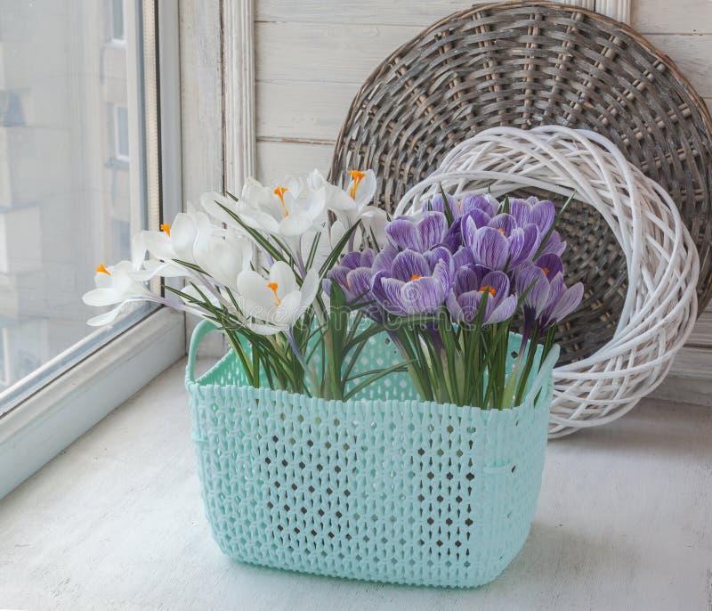 Blühende Krokusse auf dem Fenster lizenzfreies stockfoto